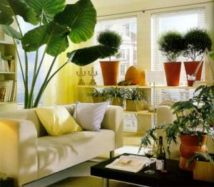 rent to own home furnishings and house plants make a house into a home