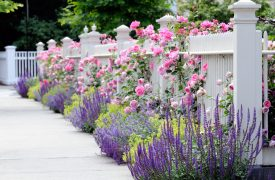 Just add flowers – some ShopRTO tips for a beautiful home garden