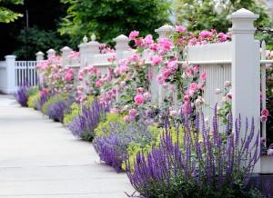 Flower planting tips