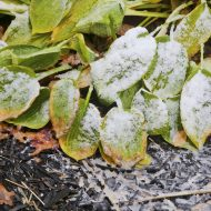 Protect your plants from freezing