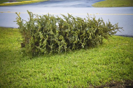 5 ways to dispose of your tree